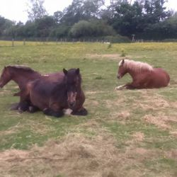 Biscuit, Bronty and Rolo