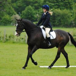 Mia and Arizona during their dressage at their first show together
