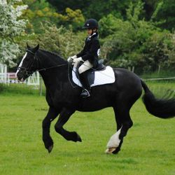 Erin and Columbo during their dressage test