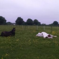While some where getting ready to go to a show others were still fast asleep - Arthur and Puzzle