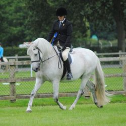Emma and Nero placing 2nd in the ridden Iberian class