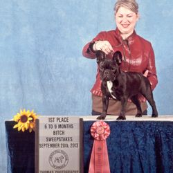 Uma winng her 6-9 sweeps class under breeder judge Mary Devine