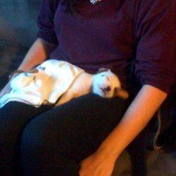 Rufus having sleepy cuddles with his new mum Jill!