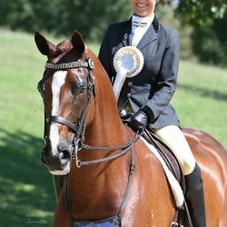 Australasian Show Horse with New Zealand rider & Equistyle Quality Stocks
