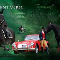 Chapelhouse Centauro stallion at stud, Danielle Skerman, International Baroque Horse Magazine & Equistyle Quality Stocks