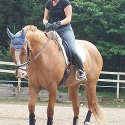 Amber training for dressage