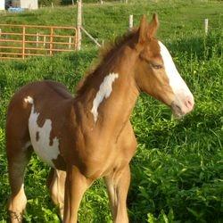 Sammy  3 days old