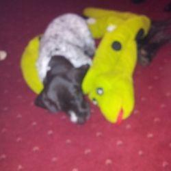 Bertie and 'friend'