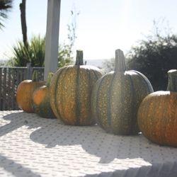 Pumpkins from our school garden