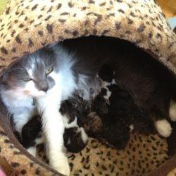 Fem små gryn var det som fick plats i den stora magen - välkomna till världen! 2013-05-09