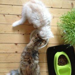 Det tog några dagar, men nu är Luna och Sickan kompisar och kan t.o.m. äta ur samma skål!