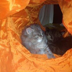 Zack och Findus har upptäckt att den roliga lektunneln också är en extra mysig sovplats! 2012-12-22