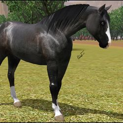 WFR Doc's Cool Snowbird owned by Arwen Winchester