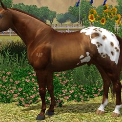 WFR Born To Bea Cutter owned by Arwen Winchester