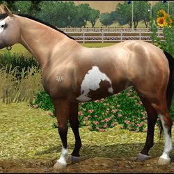 Paint Mare made for Breanna Fahnestock