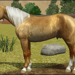 Quarter Horse Stallion for Nica Vance