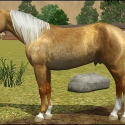 Quarter Horse Stallion for Nica Vance