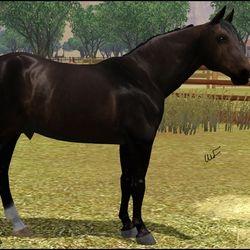 Quarter Horse Stallion for Jester Coleman