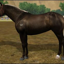 WFR Princess Of The Dark owned by Arwen Winchester