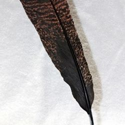 Judges Choice - Turkey Feather by Bill Russell