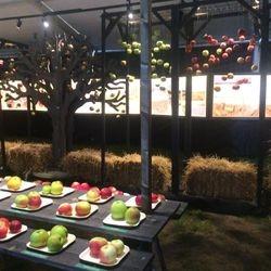Färgåtergivningen på äpplena var viktig. I bakgrunden syns sex styck LED-tavlor med sidbelyst plexi.