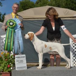 Best Puppy in Show July 30 2016