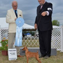 Best Puppy in Show July 31 2016