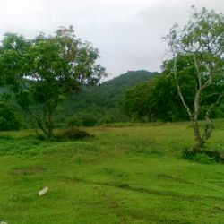 Trees around Batanags City raw land for sale.
