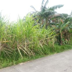 Lipa City farm lots for sale