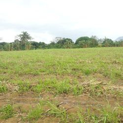Lipa City land  for sale