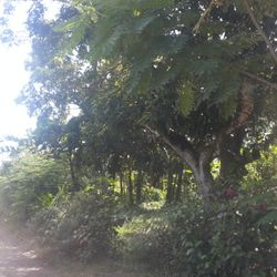 Batangas City lots for sale