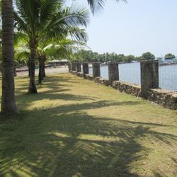 relaxing view of palm trees along the shoreline in Calatagan Batangas.