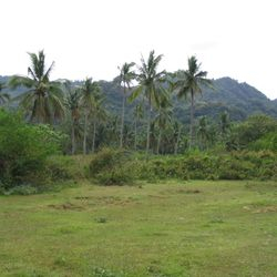 the property extends up to the coconut trees.