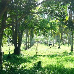Lipa City raw land  for sale