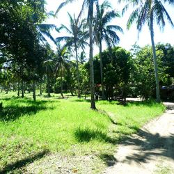 Lipa City lots for sale