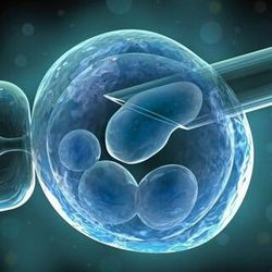 Stem Cell Libraries
