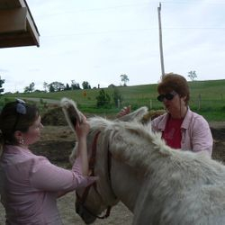 Peter donkey loves his double dose of Reiki