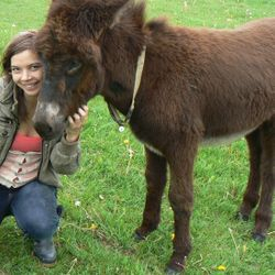 A young Christmas Donkey enjoying Animal Reiki time with Jessica