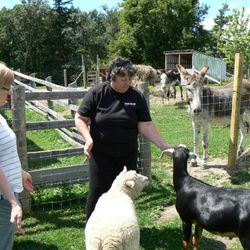 There are goats and sheep that love Reiki too!