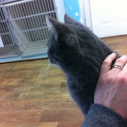 This is Beebo. Such a sweet girl! She loved her hands on Animal Reiki session