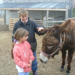 Donkeys love to have their ears rubbed and Reiki makes it extra special!