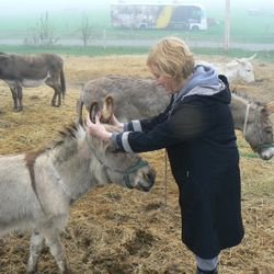 Jonathon Cupcake the miniature donkey enjoying some Reiki ear rubs.