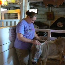 All sizes of donkeys at the sanctuary and they all love Reiki!