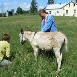 Connecting with young Patrick donkey with Reiki.
