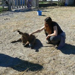 Reiki healing will have an amazing impact on Oliver donkey receiving Reiki so young.