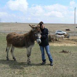 Stuart donkey enjoying the love and light of Reiki healing energy