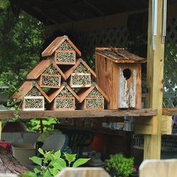 Solitary bee nest boxes help to support these wonderful pollinators in your own landscape.