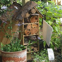 We have ways to encourage beneficial insects to take up residence in your garden.