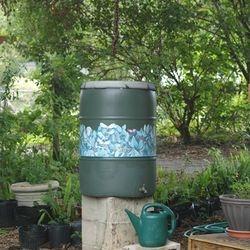 Learn about using rain barrels in your landscape.