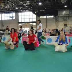 World Dog Show 2013 Junior group-3rd Place
